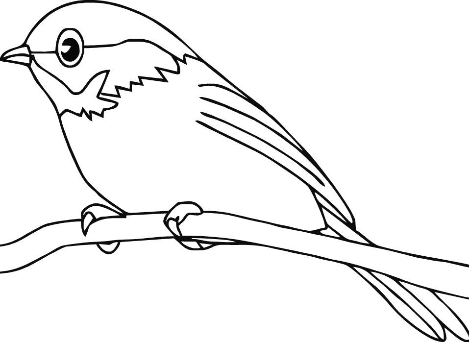 957x698 Robin Bird Coloring Robin Bird Coloring Pages For Kids