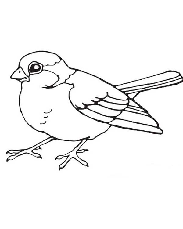 600x750 Robin Bird Coloring Sheet Blue Bird Coloring Sheet