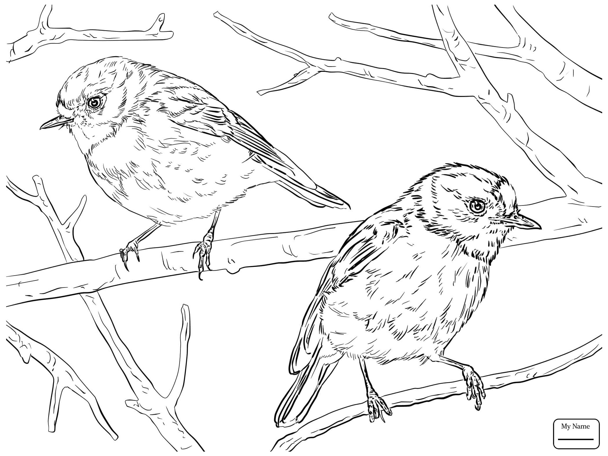 Red Robin Bird Drawing at GetDrawings.com | Free for personal use ...