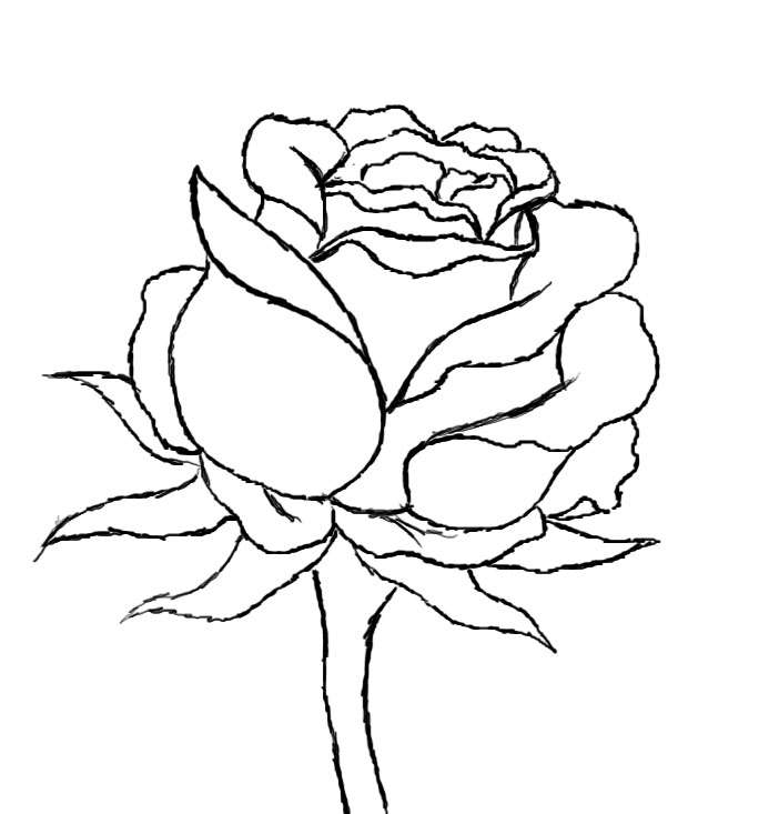 684x733 How To Draw A Rose Tattoo Rose, Drawings And Doodles