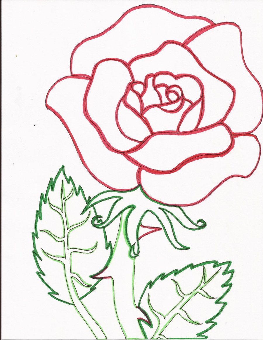 900x1165 Red Rose Line Art By Day Week