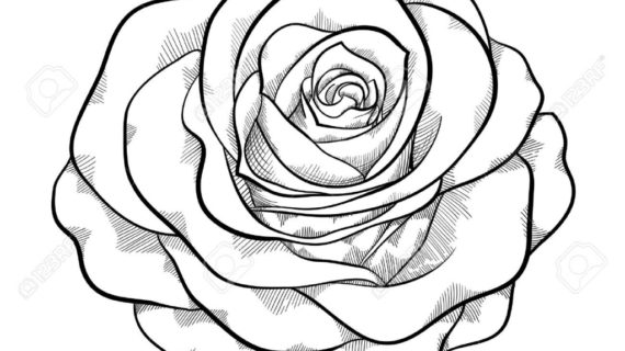 570x320 Black And White Drawing Of A Rose Black And White Rose Drawing