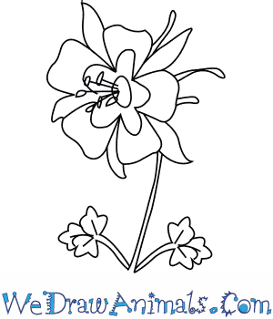 300x350 How To Draw A Columbine Flower