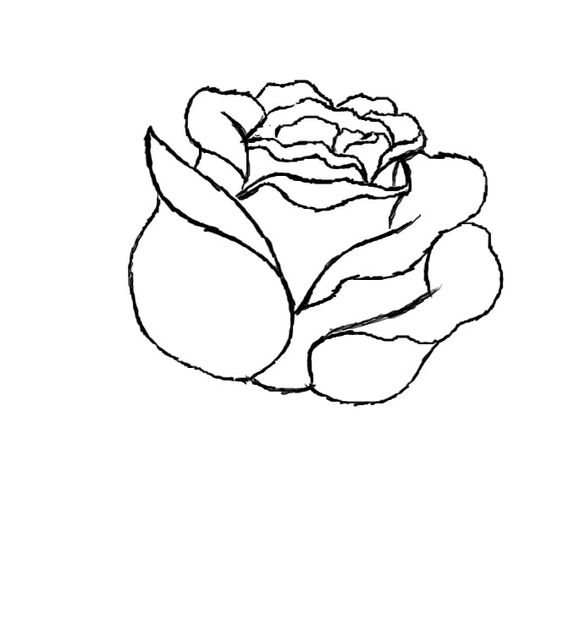 579x620 How To Draw A Red Rose Beautiful Red Roses, Art Techniques