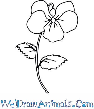 300x350 How To Draw A Violet Flower