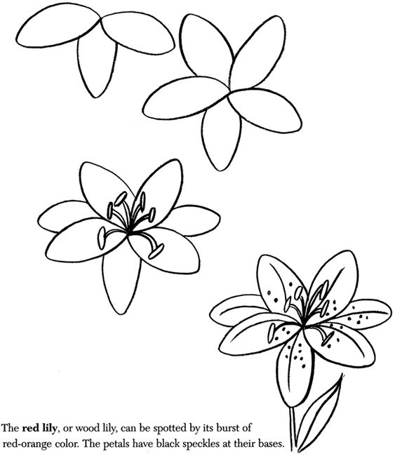 563x650 Pictures Learn To Draw Flowers,