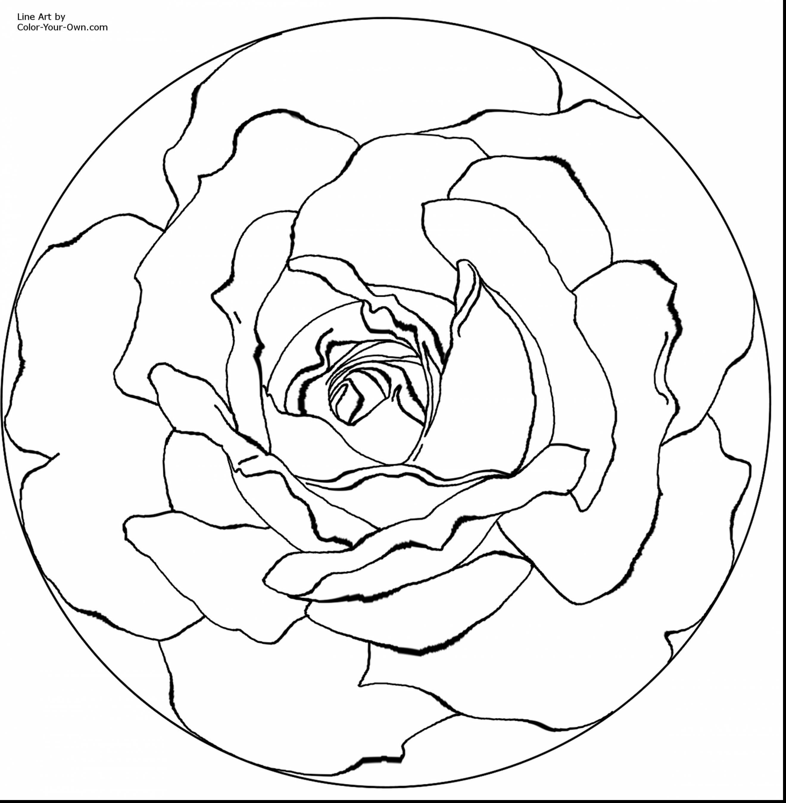 Red Roses Drawing at GetDrawings.com | Free for personal use Red ...