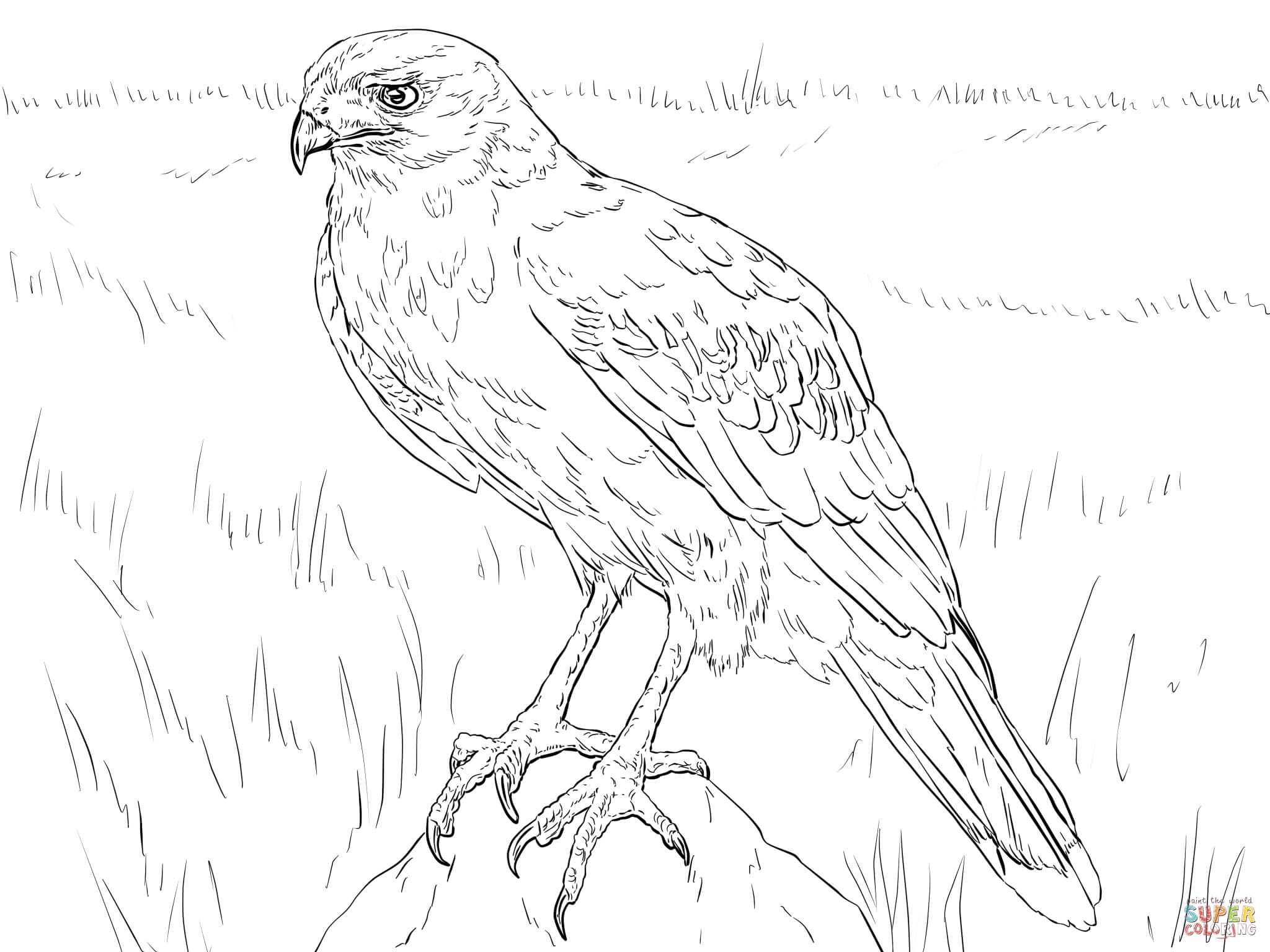 2048x1536 Hawk Coloring Pages