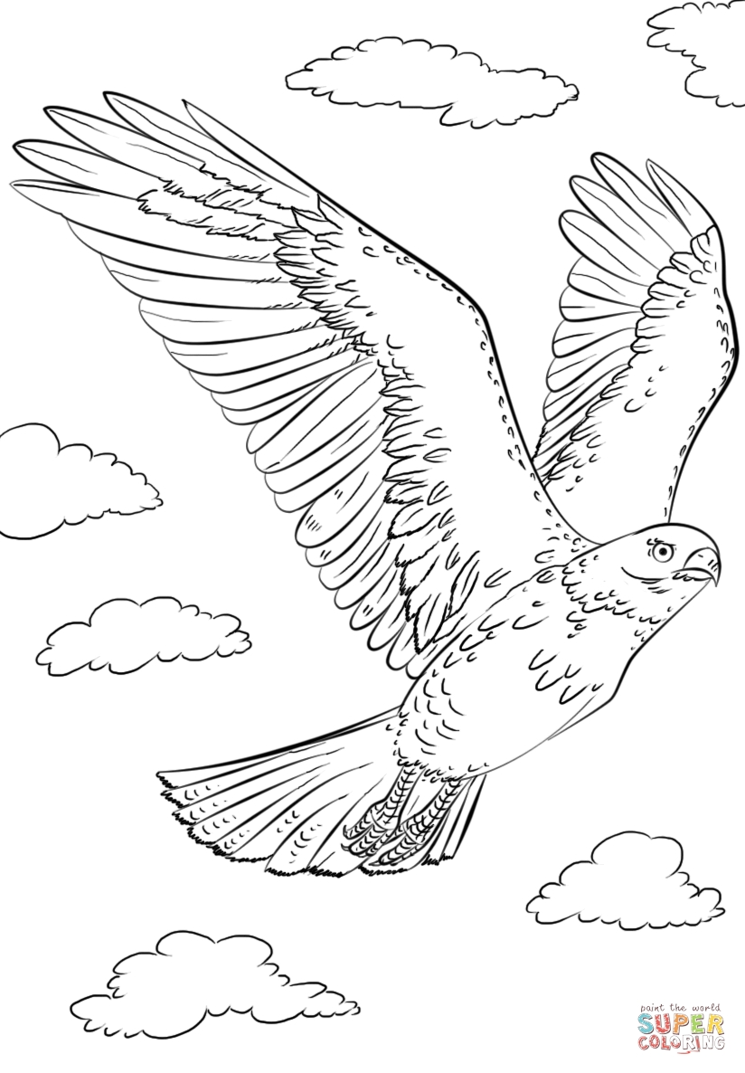 824x1186 How To Draw A Hawk Printable Coloring Pages For Kids