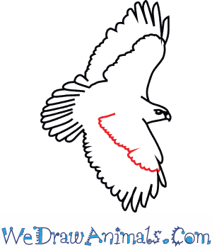 300x350 How To Draw A Red Tailed Hawk