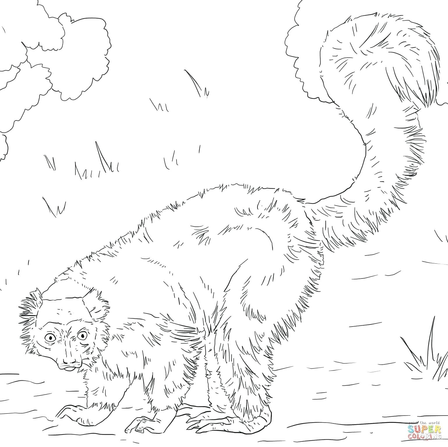 1538x1536 Coloring Red Tailed Hawk Coloring Page Ruffed Lemur Pictures. Red