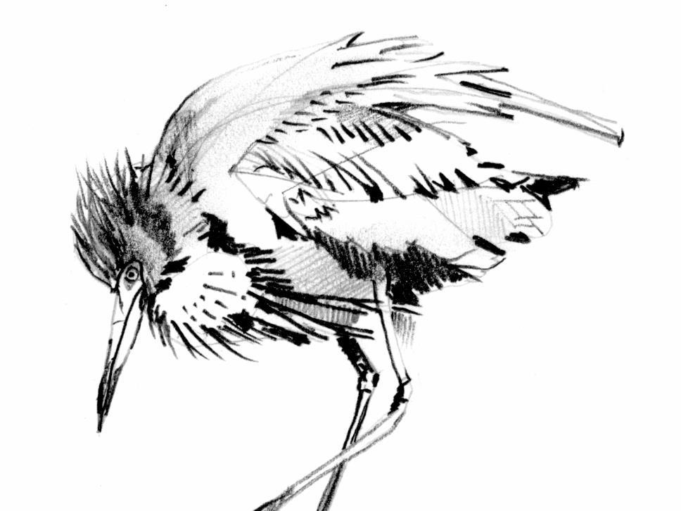 968x726 Birds