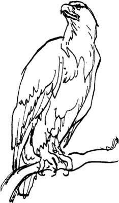 234x400 Drawn Hawk Standing Eagle