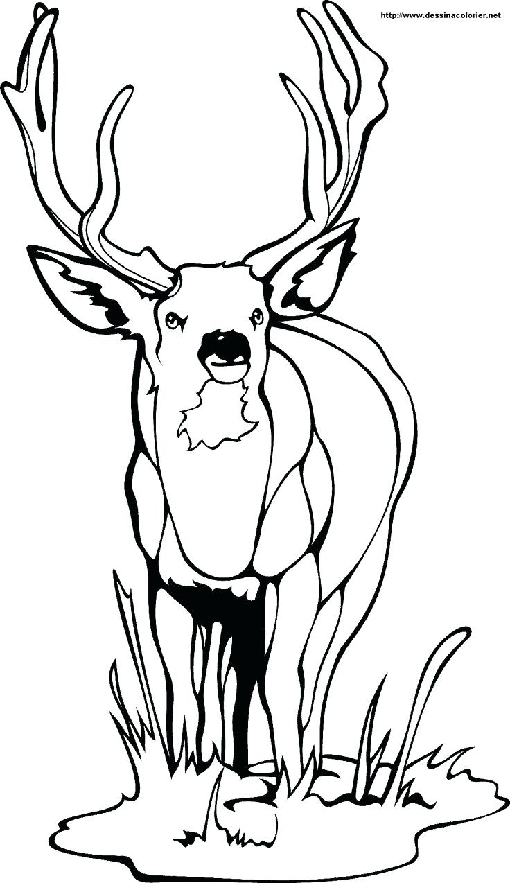 736x1274 Coloring Redskins Coloring Page