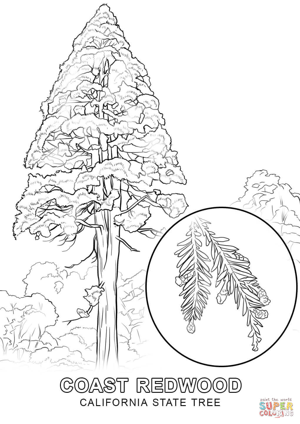 1020x1440 California State Tree Coloring Page Free Printable Pages
