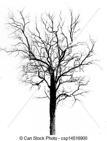Redwood Tree Drawing