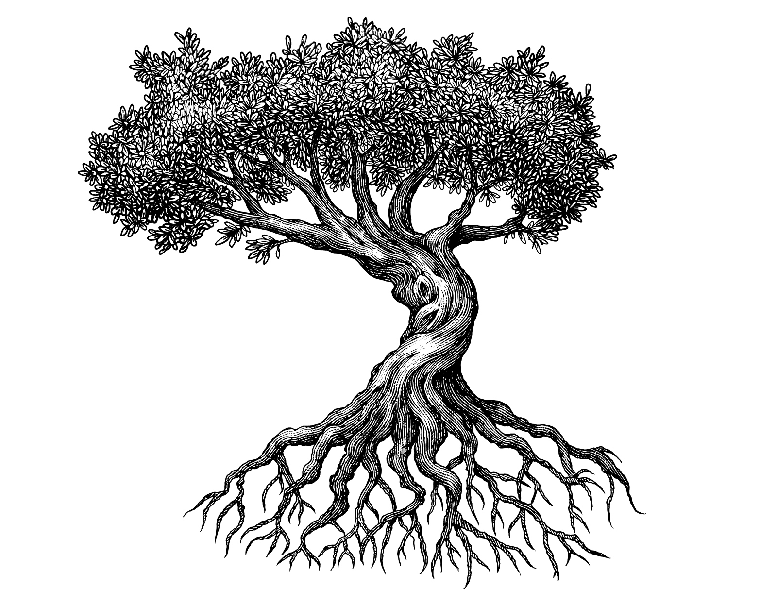1600x1248 The Tree Illustration Collection By Steven Noble On Behance