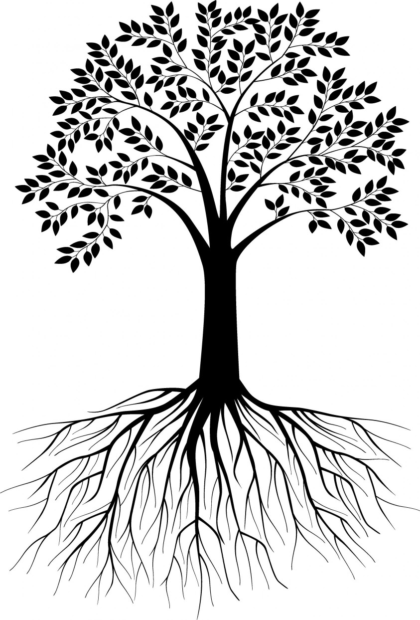 843x1243 Tree Drawing With Roots Images