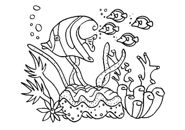 how-to-draw-coral-reef-plants