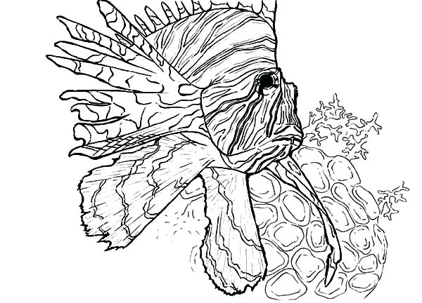 600x432 Coloring Pages Of Coral Reefs How To Draw Reef