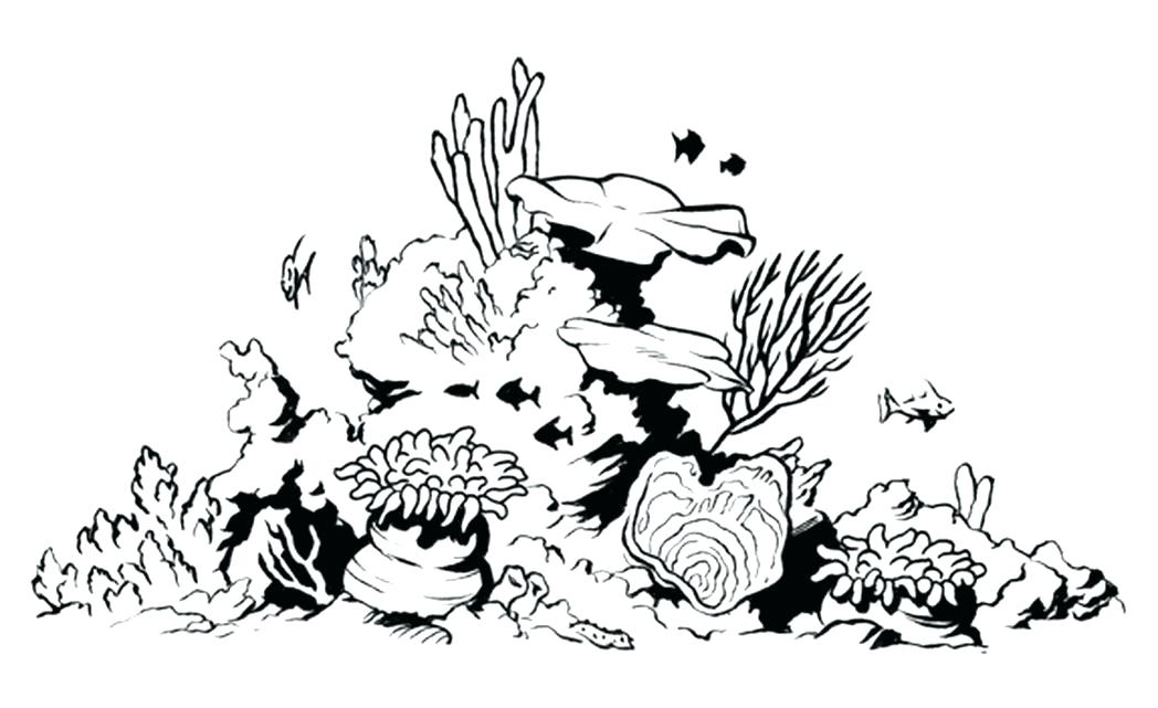 The best free Reef drawing images. Download from 508 free ...