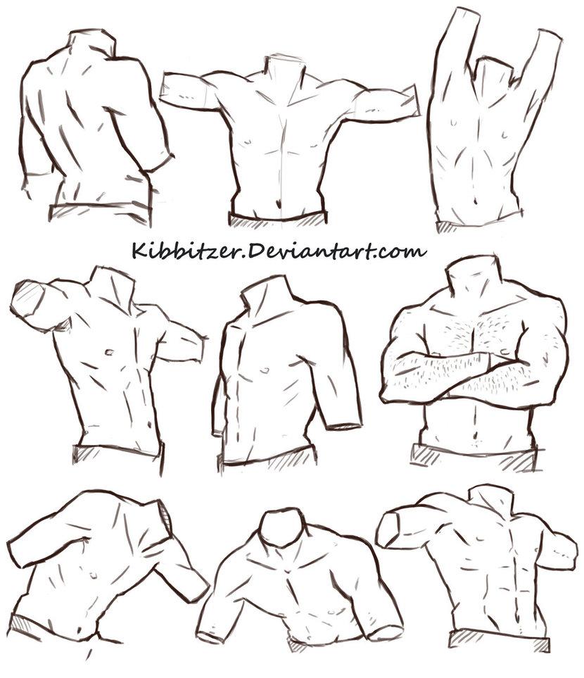 830x963 Male Torso Reference Sheet By Kibbitzer
