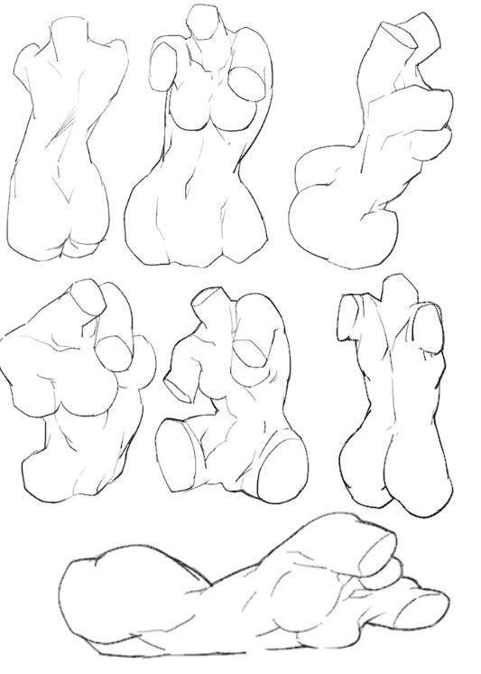533x746 Pin By Dinodeyno On L Anatomy, Drawings And Drawing