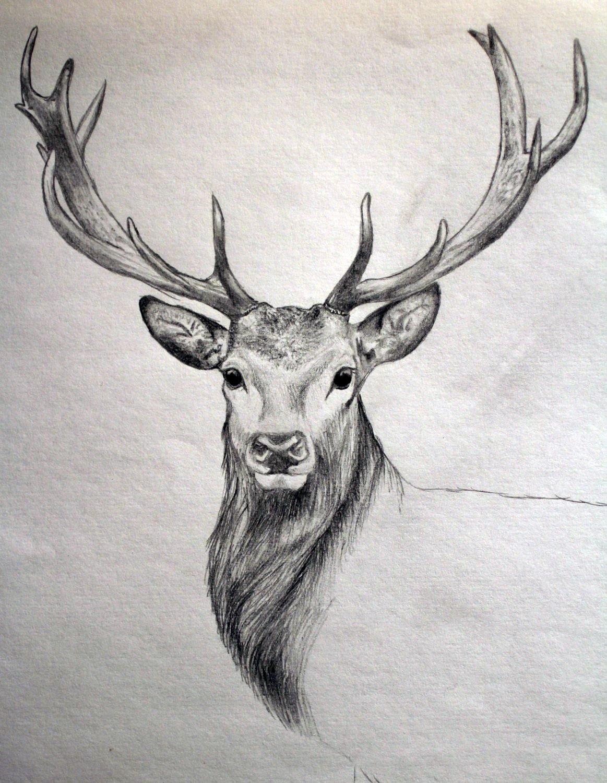 1163x1500 Deer Drawings