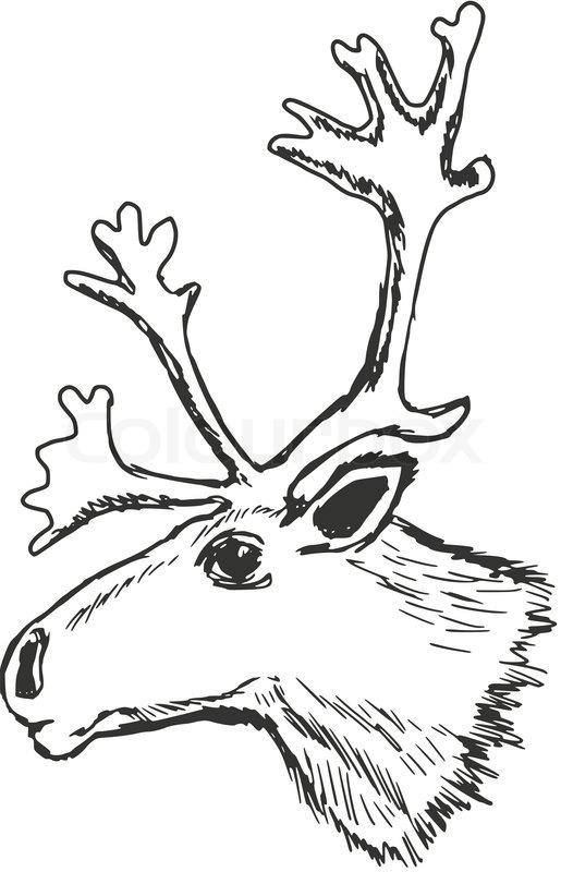 515x800 Hand Drawn, Sketch Illustration Of Head Of Reindeer Stock Vector