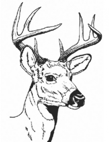 380x495 Coloring Page Stag Head Best Deer Head Coloring Pages