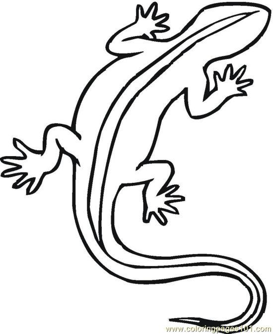 550x674 Pin Reptiles Coloring Pictures On School Projects
