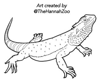 340x270 Reptile Drawing Etsy