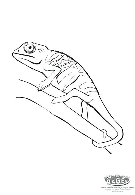 472x678 Reptiles Coloring Pages Chameleon Printable Chameleon Picture