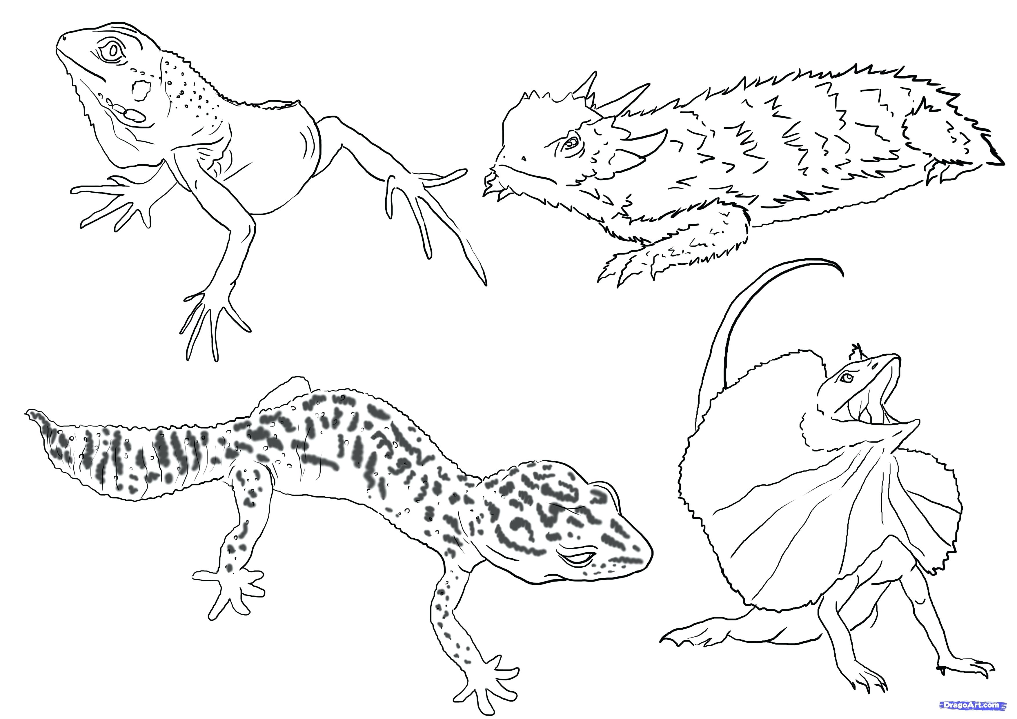 3508x2480 Coloring Coloring Pages Of Reptiles