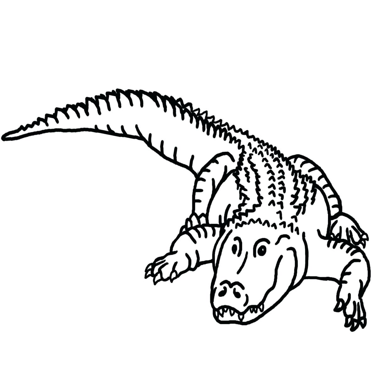 1200x1200 Coloring Reptiles Coloring Pages Drawn Reptile Line Drawing 5