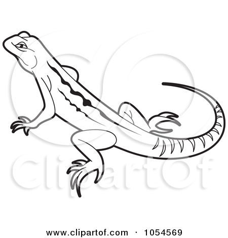450x470 Drawings Of Lizards Royalty Free Reptile Illustrations By Lal