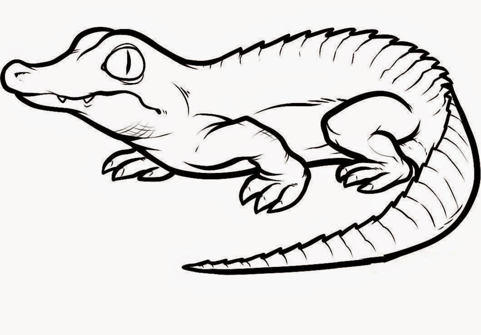 1600x1115 Crocodiles Colour Drawing Hd Wallpaper Proyecto Los Anfibios Y