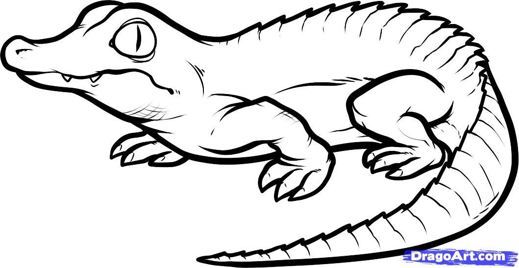 1059x547 How To Draw A Baby Crocodile, Baby Crocodile, Step By Step