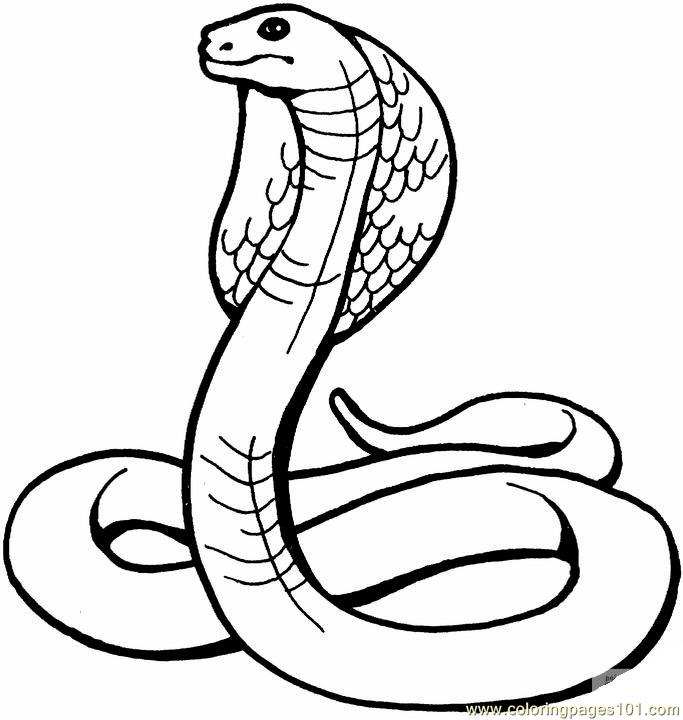 683x720 King Cobra Coloring Page
