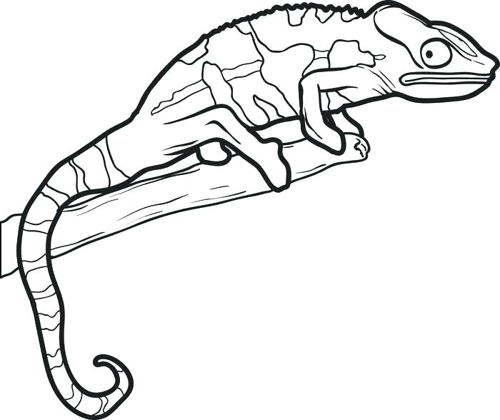 Reptiles Drawing at GetDrawings Free for personal