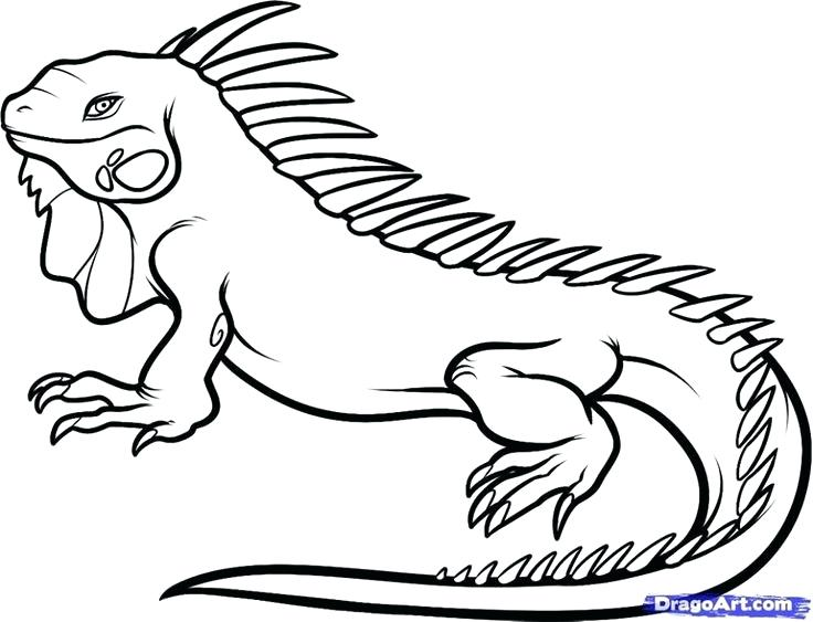 736x563 Reptiles Coloring Pages Download Snake Coloring Pages 9 Reptiles