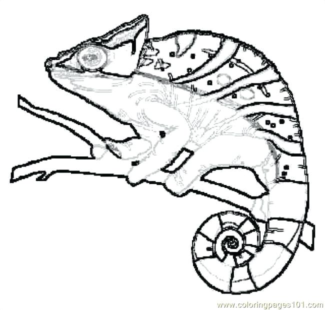 650x620 Reptiles Coloring Pages Reptile Coloring Page Free Printable