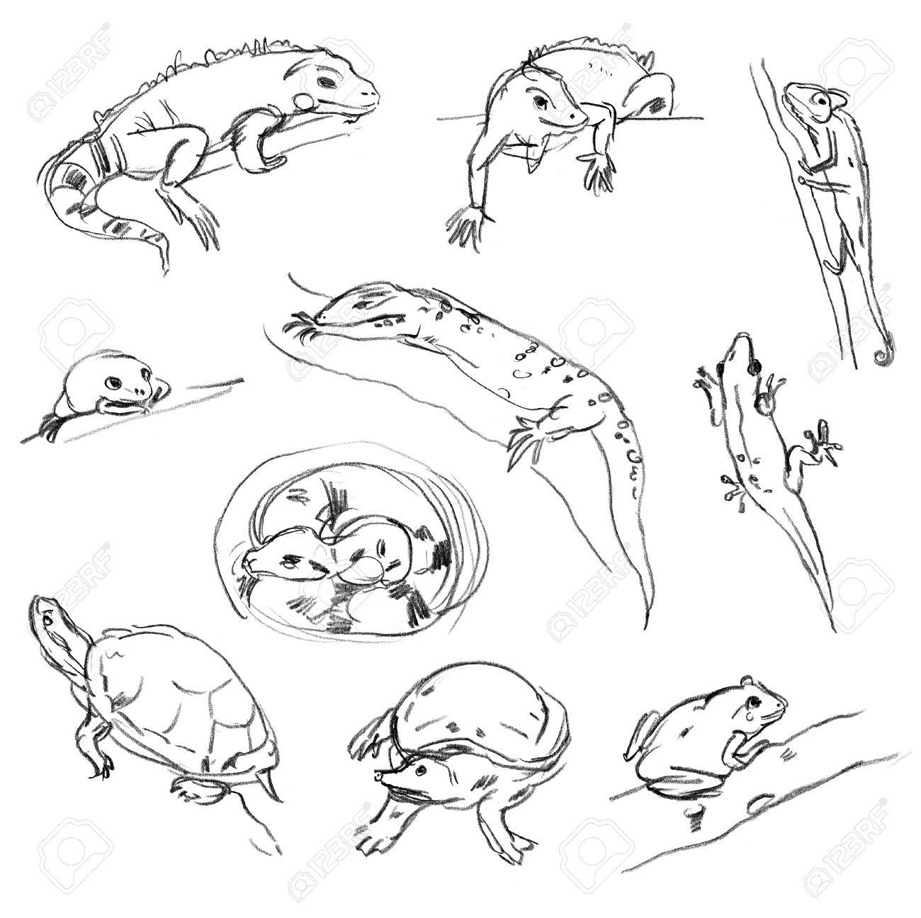 1300x1296 Reptiles. Set. Chameleon, Tree Frog, Iguana, Python, Boa, Turtle