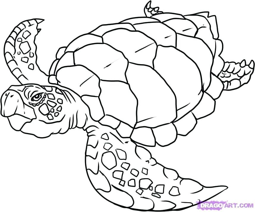 858x714 Sea Turtle Coloring Pages Sea Turtle Drawing Pictures How To Draw