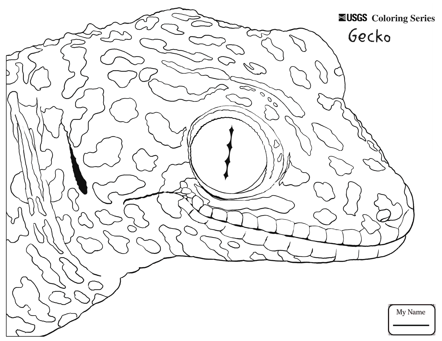 1497x1155 Coloring Pages For Kids Gecko Lizard Reptiles Common Tokay Gecko