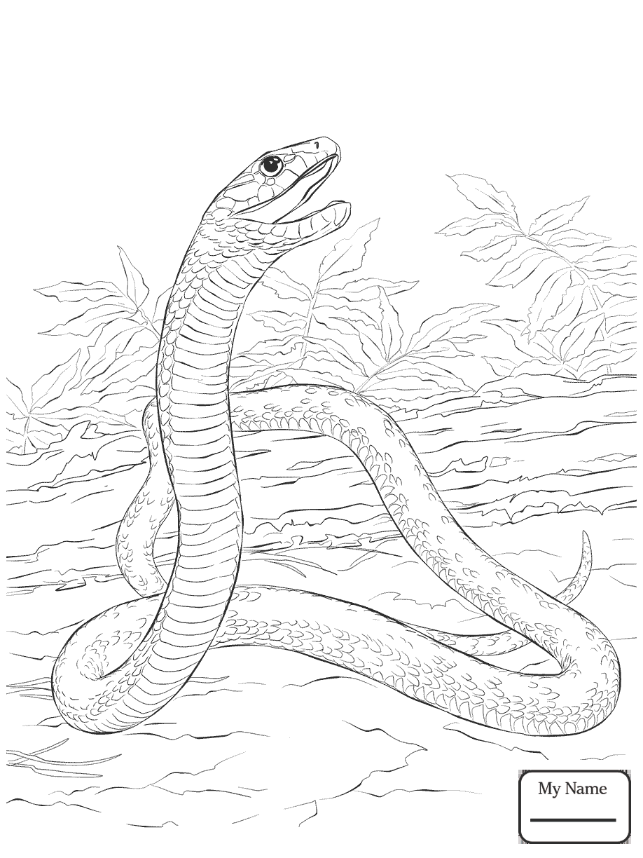 918x1224 Coloring Pages Realistic Snakes Reptiles Black Mamba