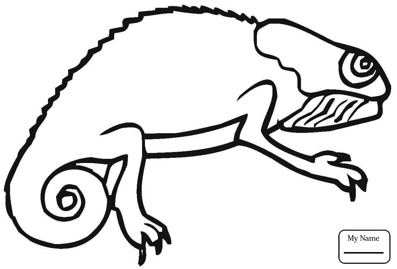 1224x830 Reptiles