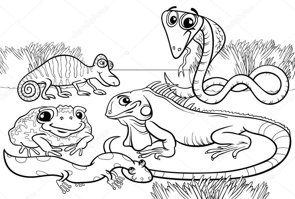 1024x690 Reptiles And Amphibians Coloring Page Stock Vector Izakowski