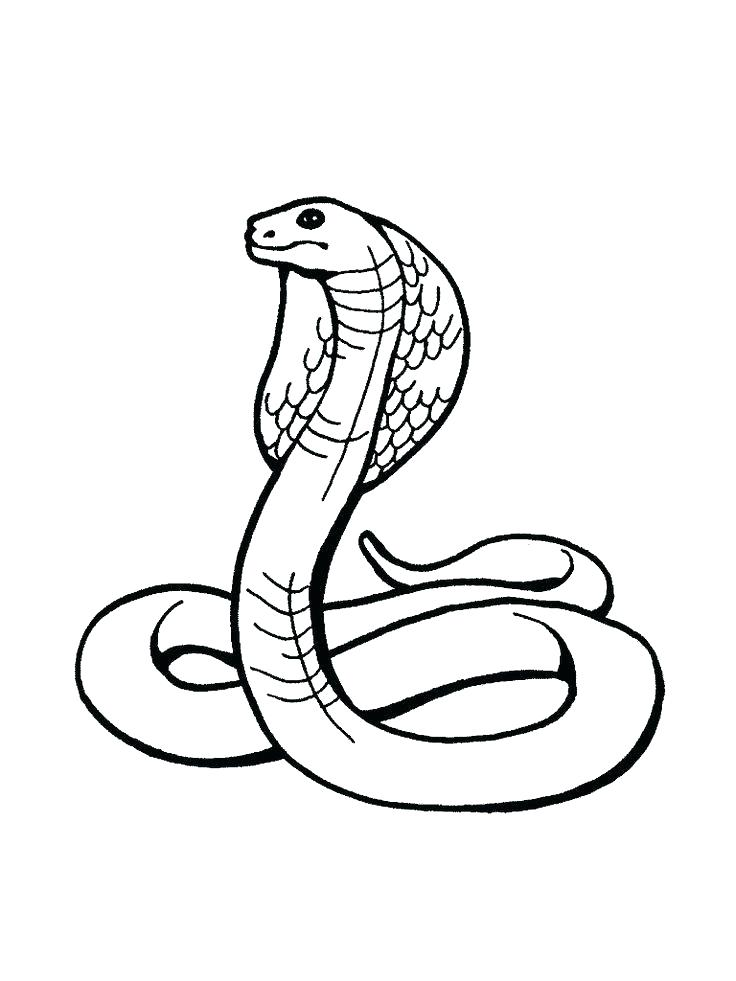 736x981 Reptiles Coloring Pages