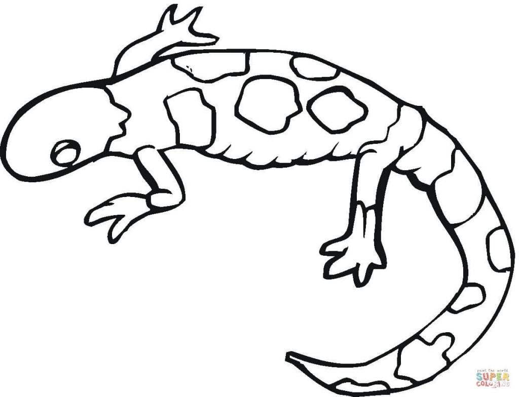 1024x784 Colorful Gecko Download Coloring Page